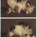 El Rafael de los gatos