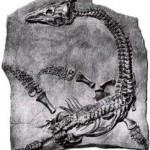 La princesa de la paleontología
