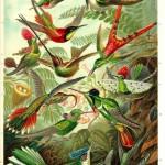 Obras de arte de la Naturaleza, de Ernst Haeckel