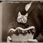 Un gato vuela sobre el Canal de la Mancha (1910)